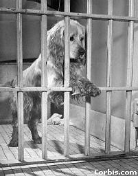 dog_jail